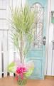 I0041) 観葉植物 ホワイトアイボリー