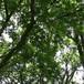 風に揺れる森の木々の葉