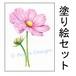 【塗り絵セット】コスモス