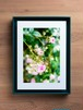 PhotoSketch&BOXSCAPE -Rose05-