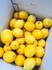 完熟レモン 10kg           (約70個入)
