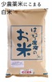 愛知県産 にこまる(白米)5kg【はっぴー米】