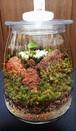 苔ボトル Kokebottle Moss bottle ライト付きセット 018