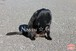 公園の黒ネコちゃん~Cute black cat in the park~①