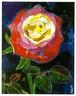 2016年 「夜のバラ」絵はがき