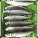 釣り鮎(鮮魚)800g