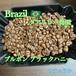 Brazil グアリロバ農園 ブルボン ブラックハニー【スペシャリティコーヒー】