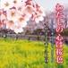 CDシングル「わたしの心は桜色」~さようなら、ごきげんよう~