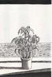 太久磨「自画像としての植物 ペン画2」