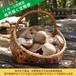 原木椎茸の定期便【12月~3月】:2,400円×4ヶ月=9,600円 [送料込]