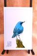 ポストカード (鳥さんシリーズ1)