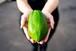 MIYAZAKI GREEN PAPAYA(1kg)