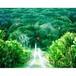 神秘の森・01(聖なるモノに導かれ、神秘の森の入り口に立つ) A4