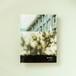 早苗久美子写真集「森を抱く」
