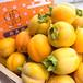 秋の贅沢 【予約】西条柿・たしな味 2L(2.5kg)