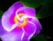 Flower-73