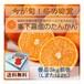 食べるジュース 完熟たんかん(優品 3Kg前後)