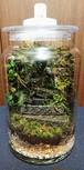 苔ボトル Kokebottle Moss bottle ライト付きセット 015