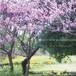 フォトパネル*【春景色】