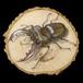 【原画】輪切り絵アート:ミヤマクワガタ レッドアイ (Lucanus maculifemoratus) Ver1.2