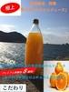 ゆらみかんジュース  果汁100% 和歌山県由良産の無添加 【1000ml/本】