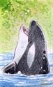 【ミニ原画】海の仲間たち⑲