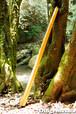 DM013 ディジュリドゥ(木の種類:ブラックチェリーのディジュリドゥ / C )
