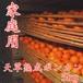 【sale!】¥2800→¥2380/家庭用訳あり/天草熟成ポンカン/5kg/2L~M/30〜43玉/熊本県産