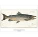 アート ポスター A4 サイズ KOUSTRUP & CO. - Salmon サーモン