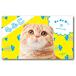 ペット名刺_長方形タイプ_猫と魚柄デザイン(1個50枚)_rec_w_001-c