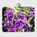 パスケース★紫の花
