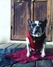 サーマルタンク  French Bulldog
