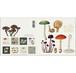 グリーティングカード 8種 封筒付き KOUSTRUP & CO. - Mushrooms マッシュルーム