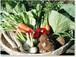 採りたての野菜を厳選して9品セレクト【3回分】