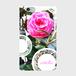 「camellia2」