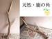 【天然・鹿の角】オブジェに! 長さ約50cm 未加工シカのツノ