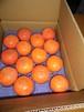 富有柿14個入り(L)ー農薬・化学肥料・除草剤不使用ー