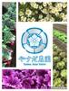 『春色』お任せ旬野菜セットM80サイズ
