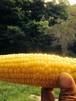 無農薬 トウモロコシ 10本