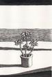 太久磨「自画像としての植物 ペン画3」