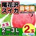 尾花沢スイカ 【自宅用】(大玉 7-8kg玉×2玉入り)