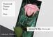 花びらに写真をプリント〜バラのギフト