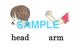 Body parts絵+英単語 フラッシュカードデータ(カラー)