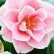 花・植物テクスチャー素材集 -Flower & Plant Texture-