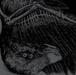 【ディストロ】BROILER/TRIKORONA「SPLIT BIRD」CD