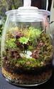 苔ボトル Kokebottle Moss bottle ライト付きセット 013