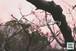 青葉の梅林~Plum grove~②