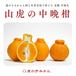 【完売】山虎の中晩柑3kg
