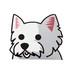 ウエストハイランドホワイトテリア(小) 犬ステッカー