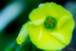 Flower-35